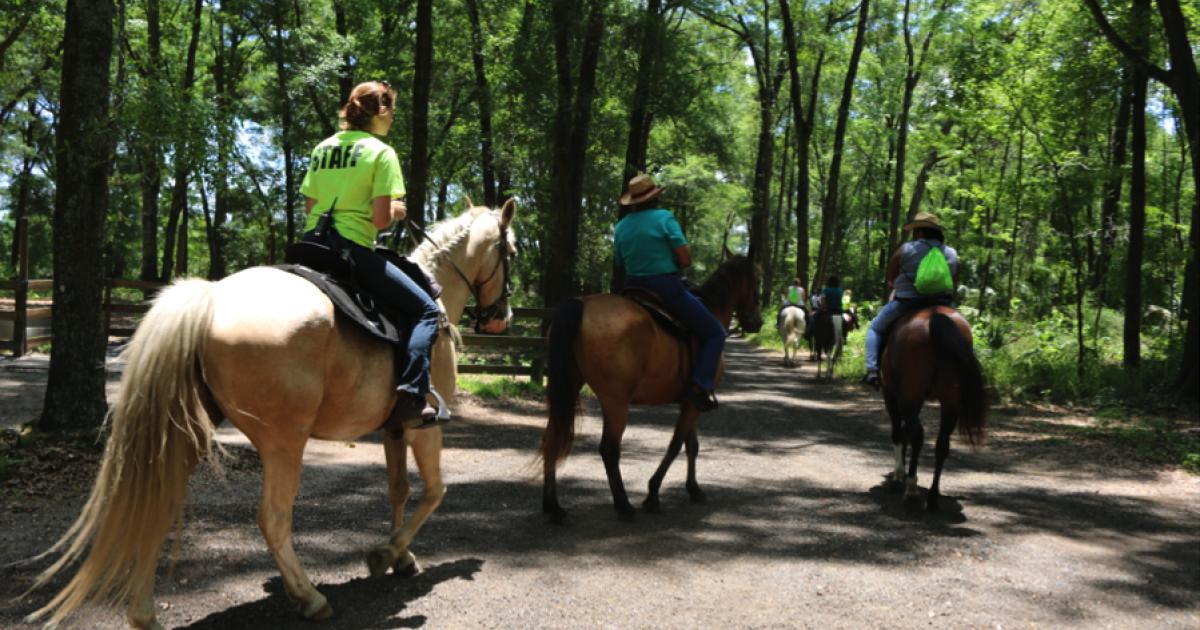 Horseback Riding For Beginners Ocala Marion County Florida